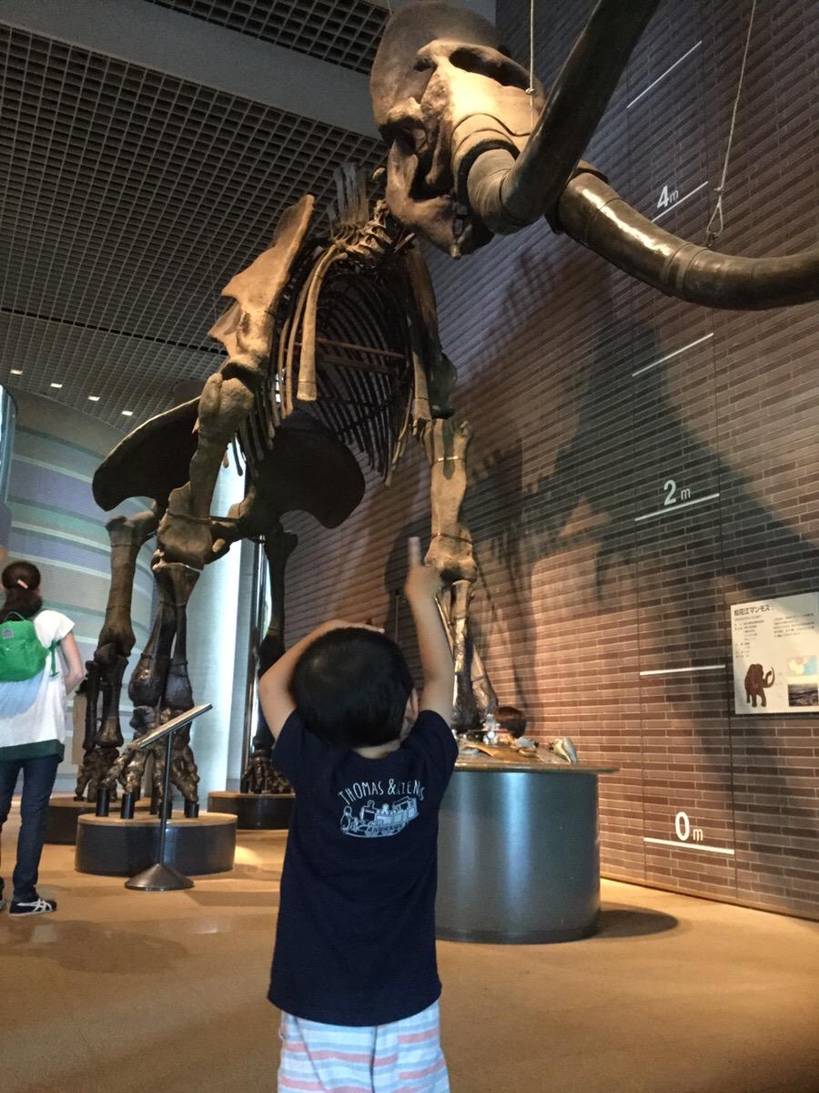茨城県自然博物館に行ってきました!