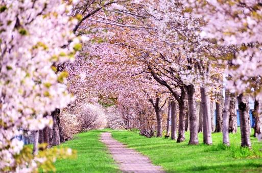 坂東で花見