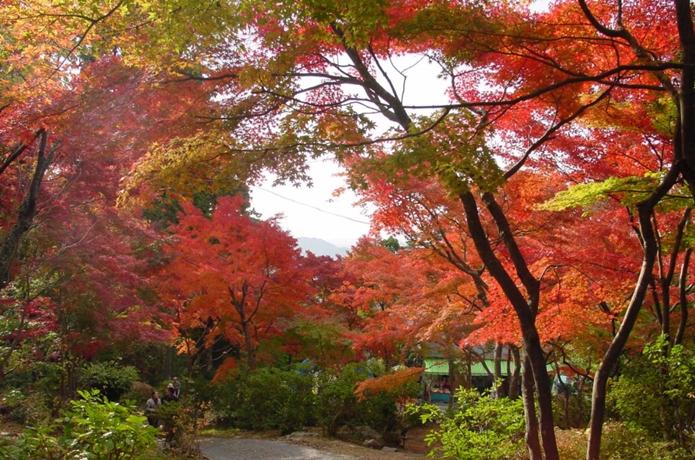 茨城県の紅葉スポット「筑波山」