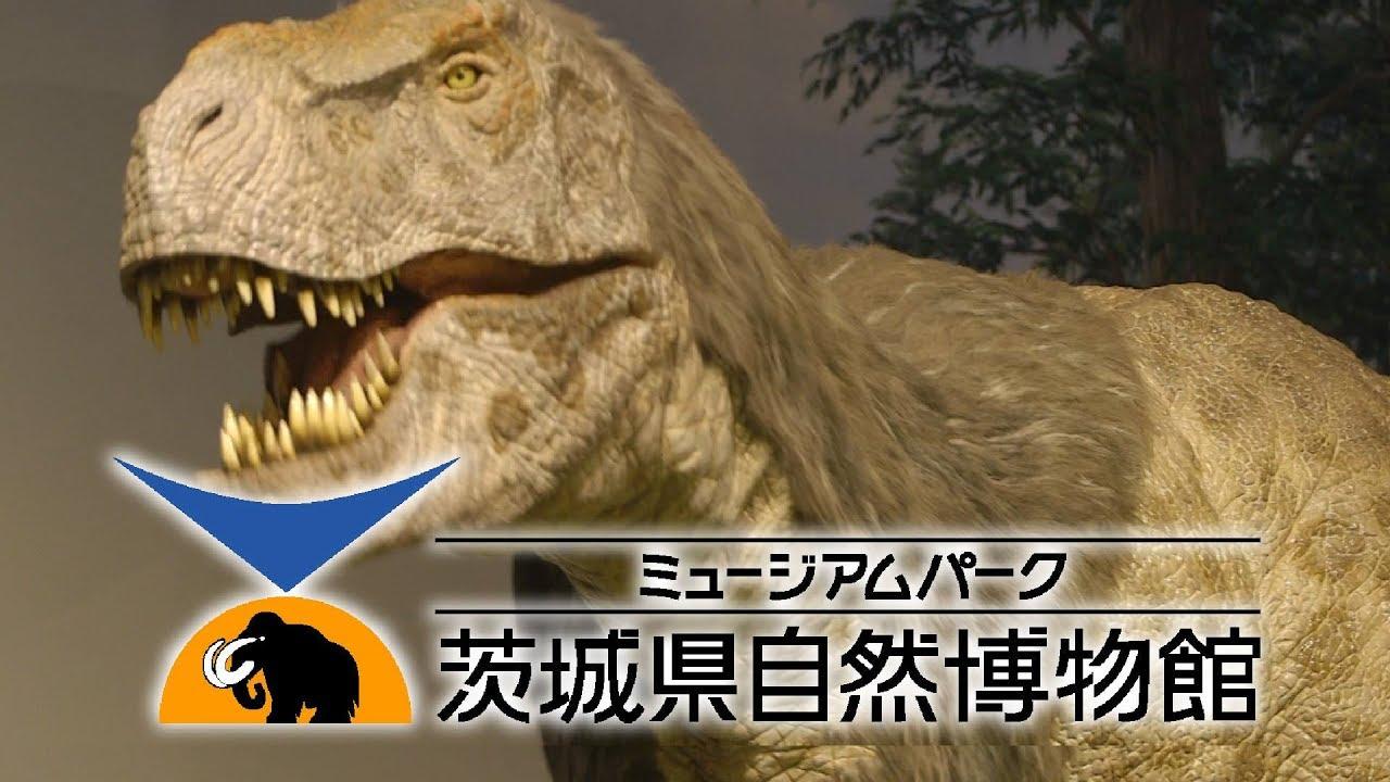 これであなたも考古学者??化石研究所へようこそ!